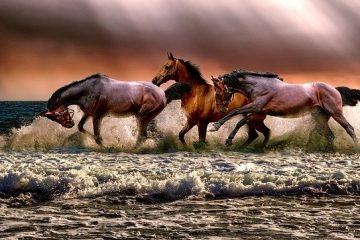 Cómo aprender a domar caballos