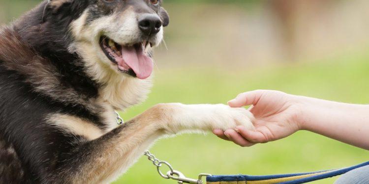 domesticar perros