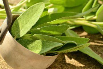cómo hacer té verde