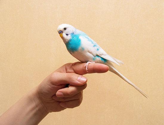 aprender a entrenar aves