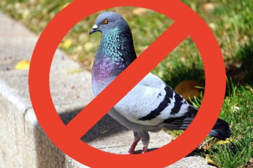 metodos para ahuyentar palomas