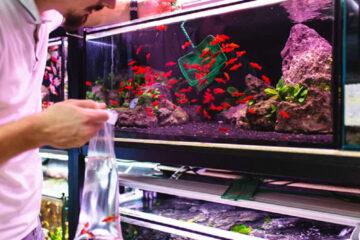 aprender a mantener un acuario